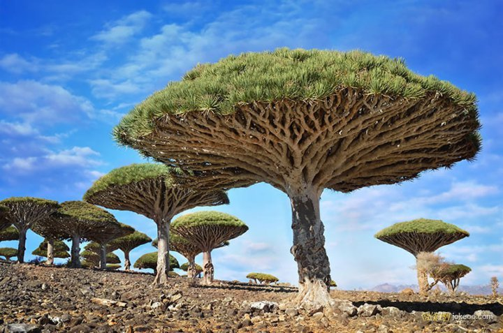 WWW_EB251343STATICTHEPLANET_COM_30处最像外星世界的地球景观 - beautiful_places_in_the_planet_07